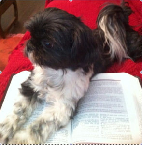 Lou Lou and Bible 2