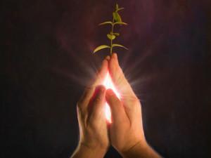 PrayerSeed